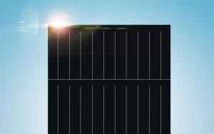 Trina Bifacial 535 Watt Solar